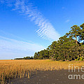 Pluff Mud And Salt Marsh At Hunting Island State Park by Louise Heusinkveld