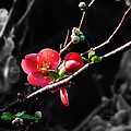 Plum Blossom 3 by Xueling Zou