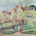 Plum Trees In Flower by Camille Pissarro