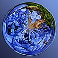 Plumbago Orbit by Phyllis Denton