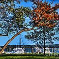 Plymouth Harbor In Autumn by Joan  Minchak