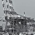 Pnct Facility In Port Newark-elizabeth Marine Terminal II by Clarence Holmes