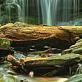 Poconos Cascades by Adam Jewell