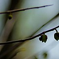 Pods Abstract by Beth Akerman