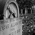 Poe's Original Grave by Jennifer Ancker