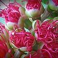 Pohutukawa Tree Flowers by Wendy Yee