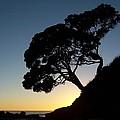 Pohutukawa Trees At Sunrise by Peter Mooyman
