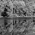 Poinsett State Park In Black And White by Sandra Clark