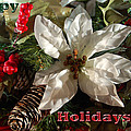 Poinsetta Christmas Card by Aimee L Maher ALM GALLERY