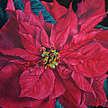 Poinsettia II Painting by Marna Edwards Flavell