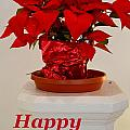 Poinsettia On A Pedestal - No 2 by Mary Deal