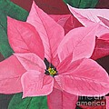 Poinsettia by Sally Rice