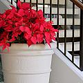 Poinsettias By The Stairway by Mary Deal