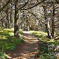 Point Lobos Cypress Path by Jack Schultz