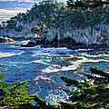 Point Lobos by Ron White