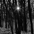 Point Of Light In Black And White by Rick Rauzi