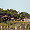 Point Pinos Lighthouse Pacific Grove California by Barbara Snyder