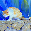Look In The Blue For The Pointing Puma by Hilde Widerberg