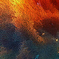 Points Of Light Abstract Art By Sharon Cummings by Sharon Cummings