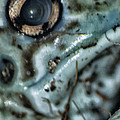 Poisonous Frog Eye by Thomas Woolworth