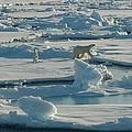 Polar Bear And Her Cub by Kelley Elliott