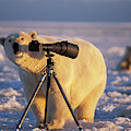 Polar Bear Investigating Photographers by Steven J. Kazlowski / GHG