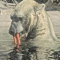 Polar Bear Snacking by Vi Brown