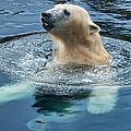 Polar Bear Swim In Cold Water by Berkehaus Photography