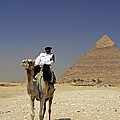 Police Officer On A Camel In Front Of Pyramid In Cairo Egypt by Dray Van Beeck