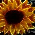 Polka Dot Glowing Sunflower by Barbara Griffin