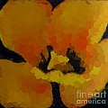 Polka Dot Yellow Blooming Tulip by Barbara Griffin