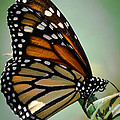 Polka Dots And Wings by DigiArt Diaries by Vicky B Fuller