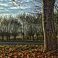 Pollard Willows In Rotterdam by Frans Blok