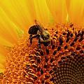 Pollen Jock by Terri JS Molitor