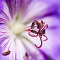 Pollen  by Priya Ghose