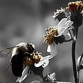 Pollination  by Debra Forand