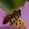 Pollination by Don Schwartz