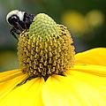 Pollination by Rick Kuperberg Sr