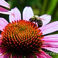 Pollinator by K L Roberts