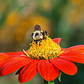 Pollinator by James Peterson