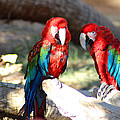 Polly And Pauly by Dick Botkin