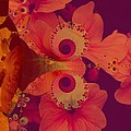 Polyanthus Spiral by Nancy Pauling