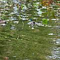 Pond 4 by Jeelan Clark