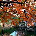 Fall At Lost Maples State Natural Area by Michael Tidwell