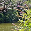 Pond At Norfolk Botanical Garden 12 by Jeelan Clark