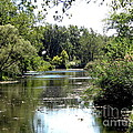 Pond At Tifft Nature Preserve Buffalo New York  by Rose Santuci-Sofranko