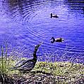 Pond Days by Madeline Ellis