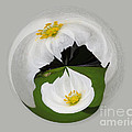 Pond Flower Orb by Darleen Stry