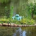 Pond Frog by Maria Urso