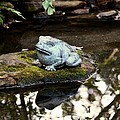 Pond Frog Statuette by Maria Urso